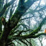 BlueM stuurt je het bos in (of: kom naar de Bosconferentie!)